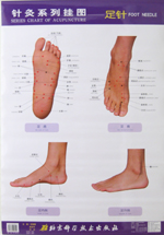 series chart of acupuncture foot needle - china books, Cephalic Vein
